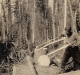 Historic image of man cutting logs with a suede saw